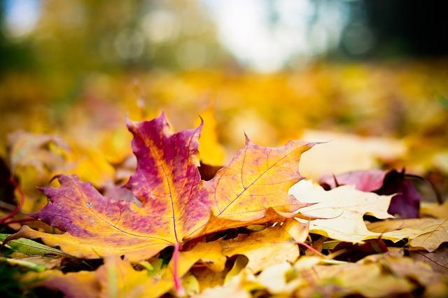 září - padání listí
