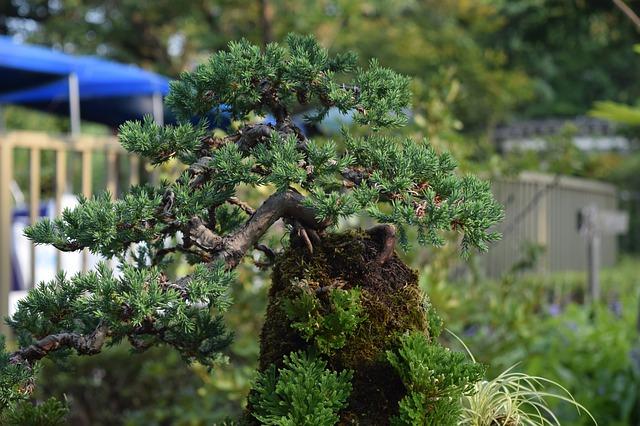 zahradní bonsaje